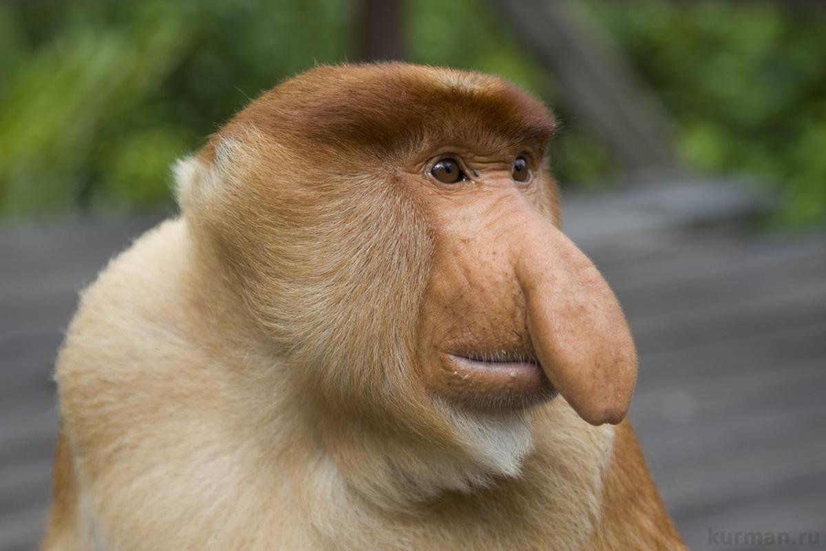 Самые необычные животные мира видео - Носач