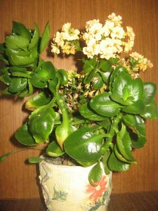 cveti5