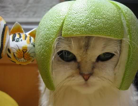 Кошка в шлеме