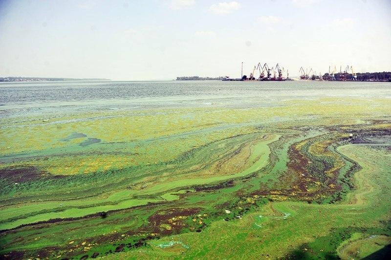 Рисунок проблема загрязнения океана  - цветение воды
