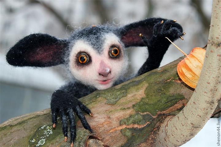 Необычные животные - Мадагаскарская руконожка