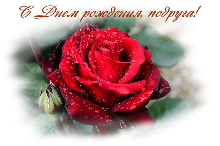 Открытки с Днем Рождения розы