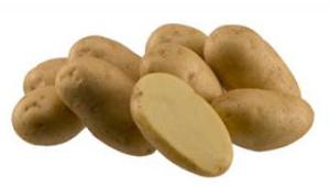 Высокоурожайное выращивание картофеля по голландской технологии