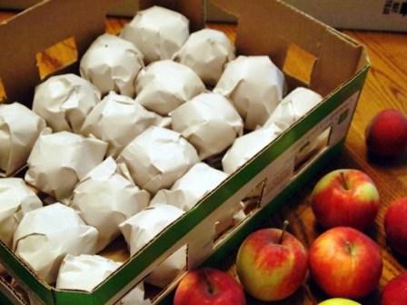 Как хранить и сохранить яблоки и груши на зиму свежими в домашних условиях в квартире или погребе