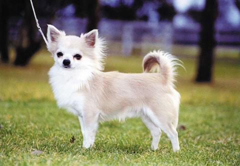 Самая дорогая собака в мире цена
